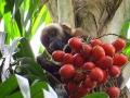AmazonABC_berries_200