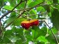 AmazonABC_fruit_200