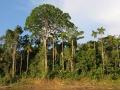 AmazonABC_river_200