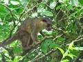 Olingo_-Monteverde