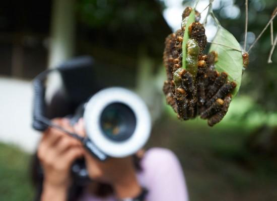 Wildlife Cinematography