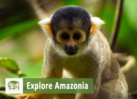 PERU: Tropical Biology and Primatology, January 2016