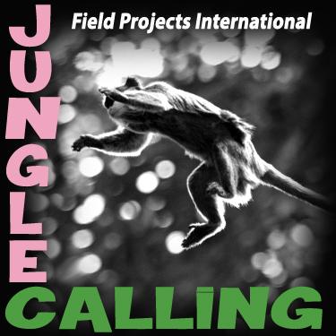 jungle calling copy