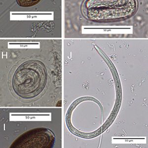 intestinalParasites
