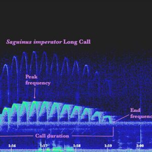 spectrogram_final